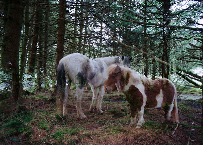 Ghost horses in Cornwall Kíra Krász.jpg