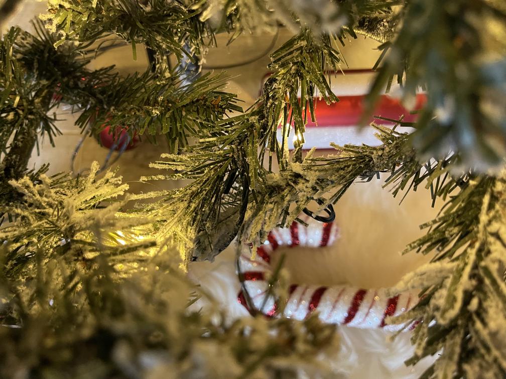 Christmas tree, candy cane, lights