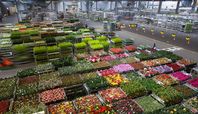 71378_fullimage_floraholland-naaldwijk-d