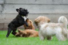 playing-puppies-790638_960_720.jpg