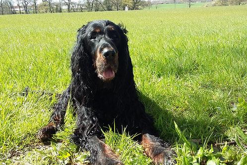 SILVER Club Membership 1 Dog