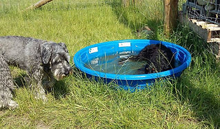 louging in the paddling pool