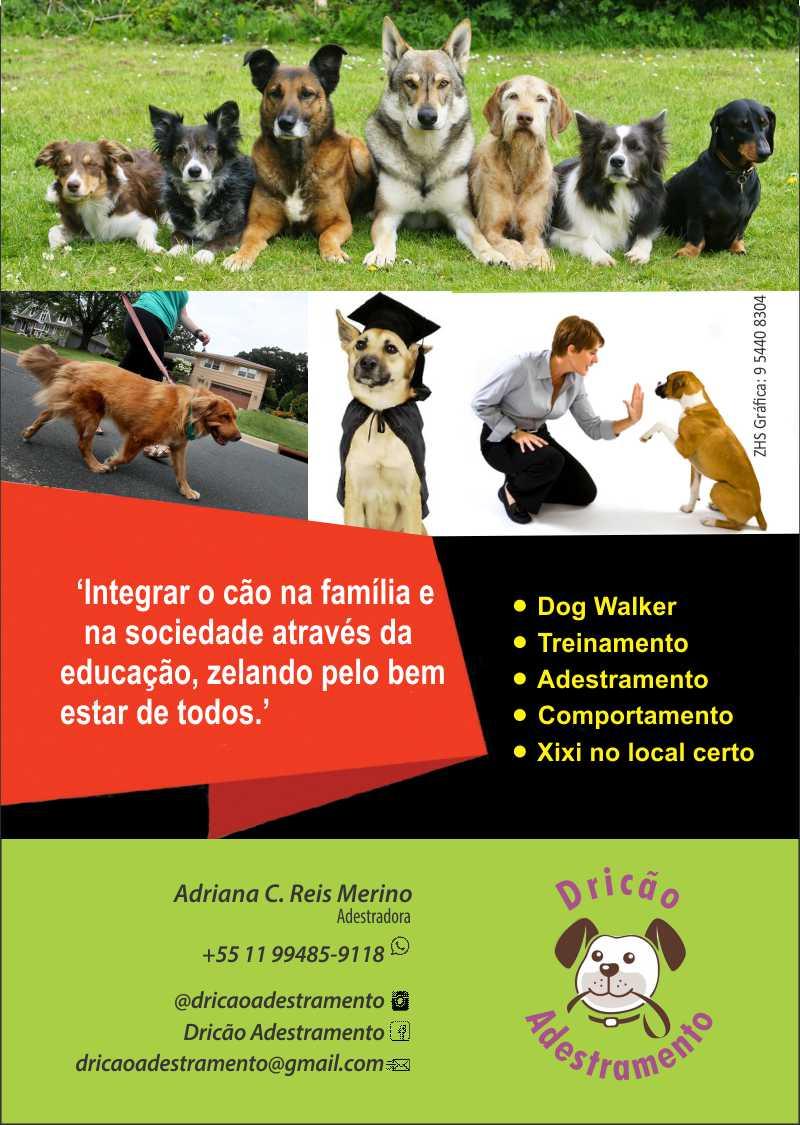 Dricão_Folheto - 4x0 cores - 10x14cm - C