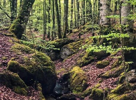 Circular Sima de Anbulolatz y Cima Azalegi (1.170 m)