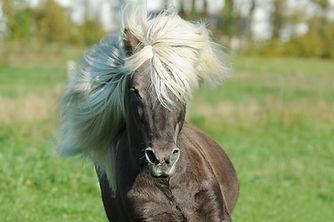 Billedet af en hest til CBD olie og salve.jpg