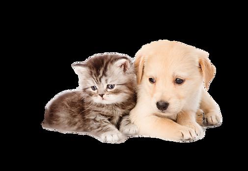 Billede af hvalp og kattekilling til CBD og cannabias produkter png