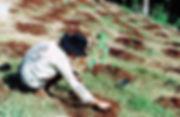 j_planting_before.jpg