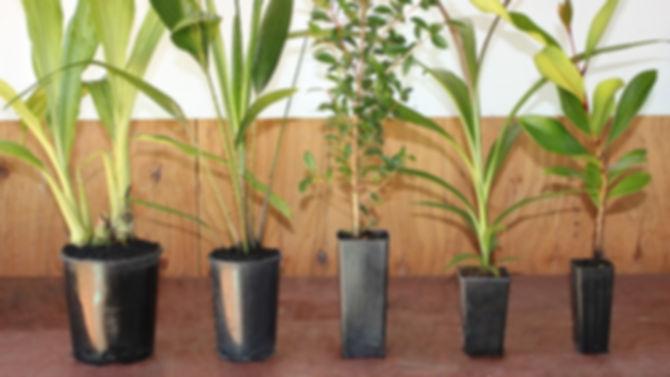 Firewheel_Nursery_2012_54panotouchup_640