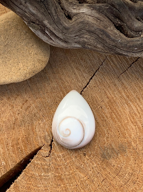 Shiva Eye Shell 24x32mm