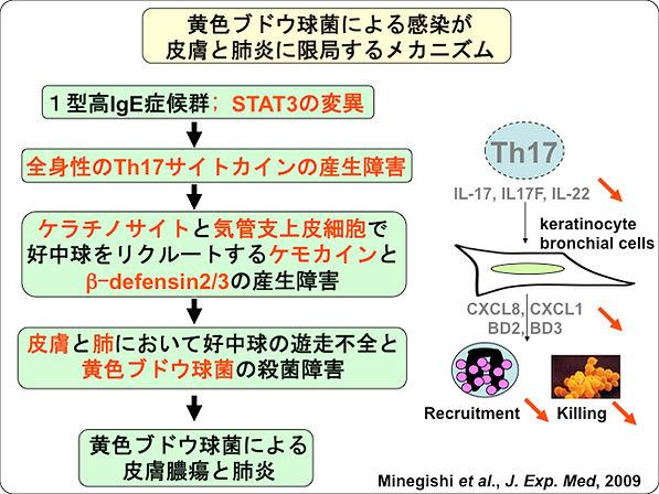mechanizm1.jpg