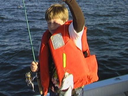 Cole's Bluefish