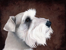 Title:  Miniature Schnauzer - So Devoted and Loyal Size:  8.5x11 inches Medium:  Colored Pencil on Clairefontaine PastelMat
