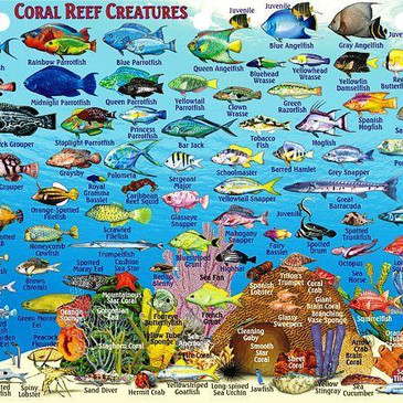 Coral reef creatures in Exuma