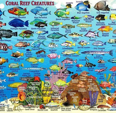 Coral reef creatures in Exuma