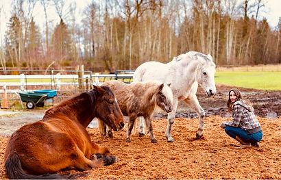 horseNicole.jpg
