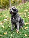 Irie My Hikng Pup