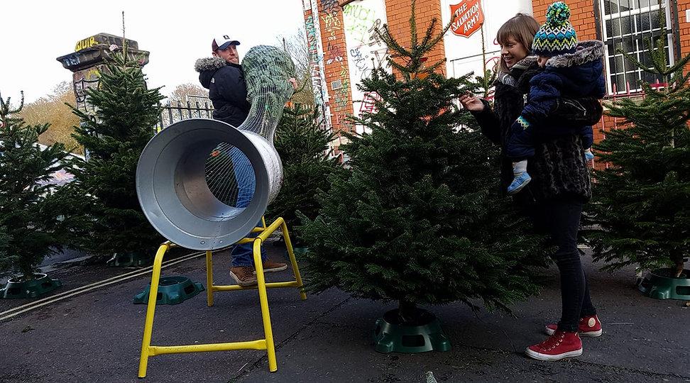 Bristol Christmas Trees.jpg