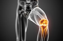 Knee-Joint-highlighted_cropped.jpg