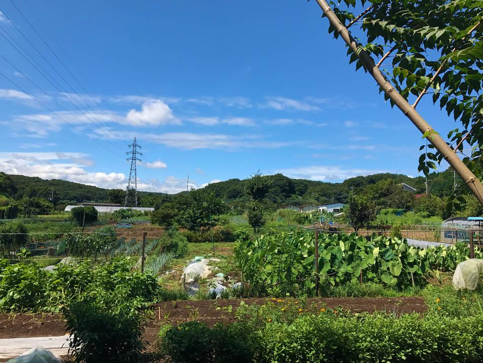 ユギムラ体験農園内ひまわり畑
