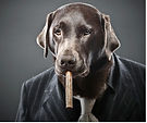 dog-smoking-cigar jpeg.jpg