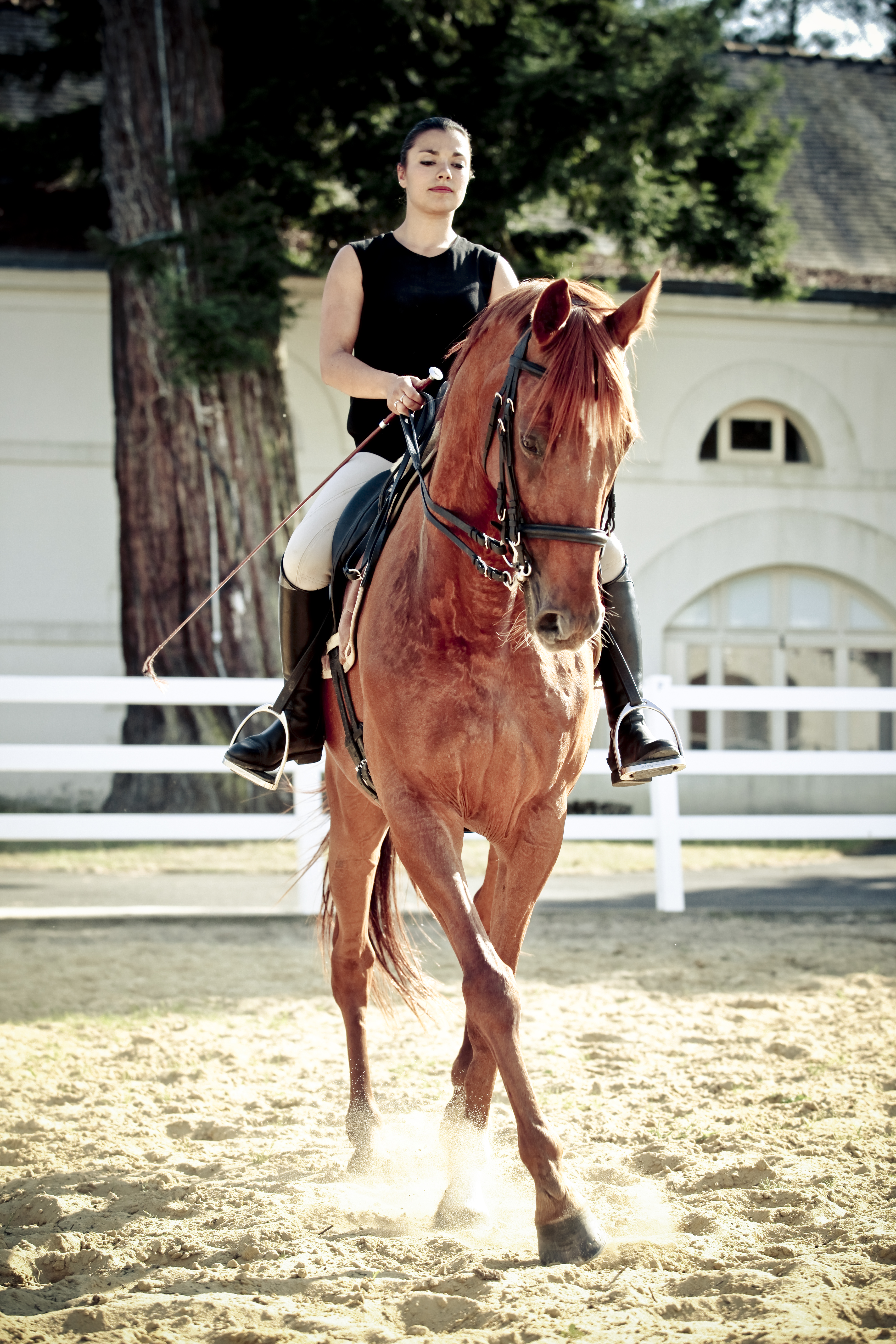 A cheval - Dressage