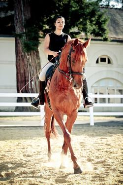 A cheval - Dressage