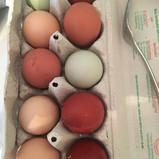 So verschiedene Hühner Ei Farben