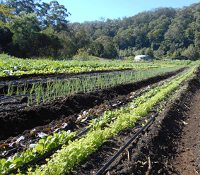 HANGING ROCK FARM