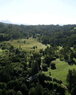 Subtropical rainforest at Jerrapark, NSWByron hinterland