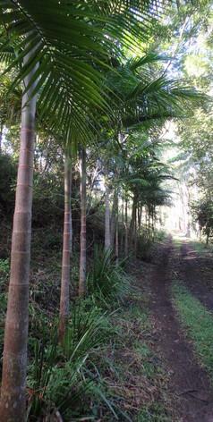 When coming to Jerrapark, you enter a subtropical Rainforest world