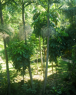 Jerrapark's is a permaculture farm with large orchard and subtropical rainforest to watch a very diverse wildlife