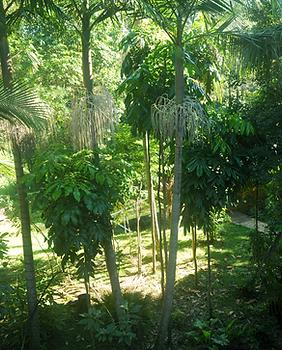 Jerrapark-nature.png