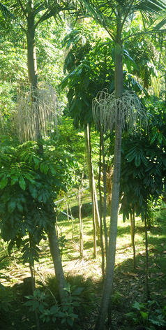 Jerrapark is a permaculture Farm in the Northern Rivers Region of NSW with beautiful Subtropical Rainforest