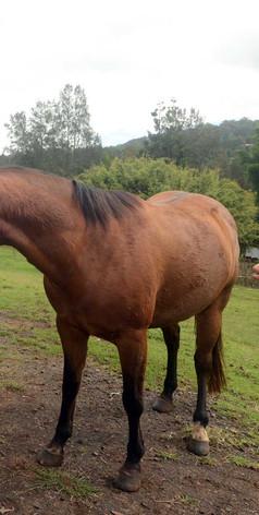 Horse clinics at Jerrapark, NSW
