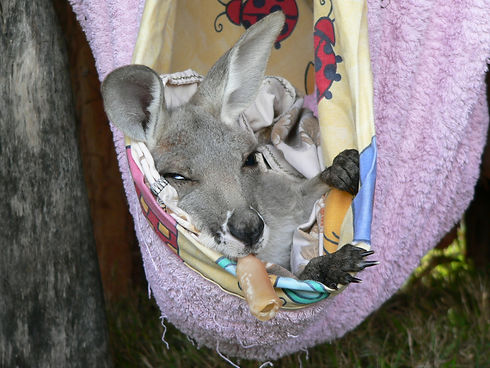Wildlife carers increase survival rates with the right products