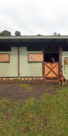 Horse stables at Jerrapark
