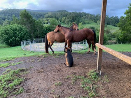 Jerrapark can host Horse clinics in the northern Rivers