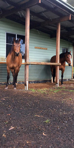 Horses facilities at Jerrapark: a coral, fields and stables