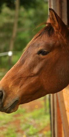 Horses at Jerrapark Hideaway