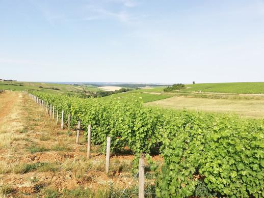 Balade et dégustation dans les vignes
