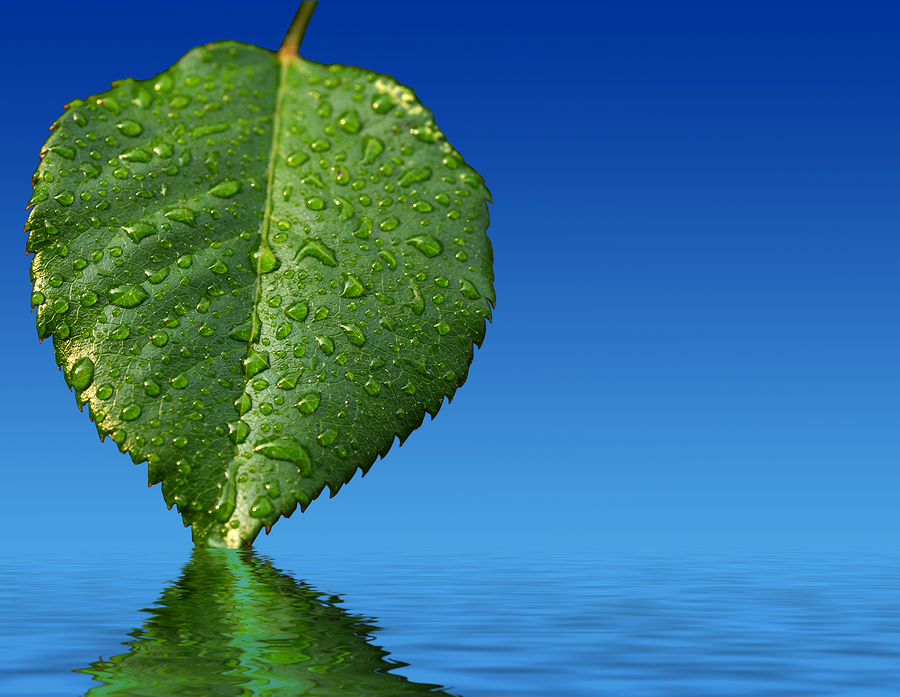 bigstock-Leaf-And-Reflection-1810298.jpg