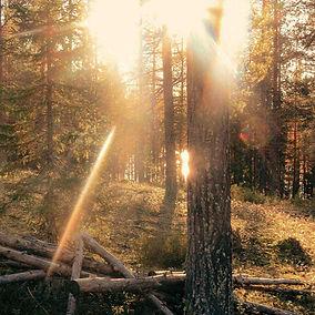 Waldbaden_edited.jpg