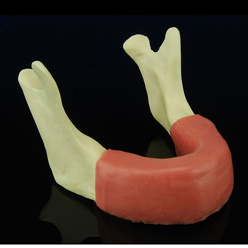 Mandible With Soft Tissue