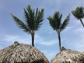 Travel Diaries: Casandra's Week in Punta Cana