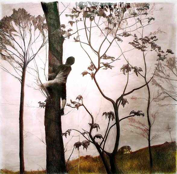 Boy on a Tree