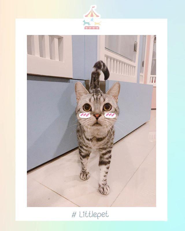 Dog/Cat Shampoo Only