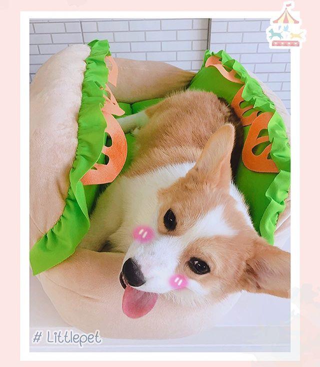 ที่นอน hotdog สำหรับน้องหมา น้องแมว 🌭_พ