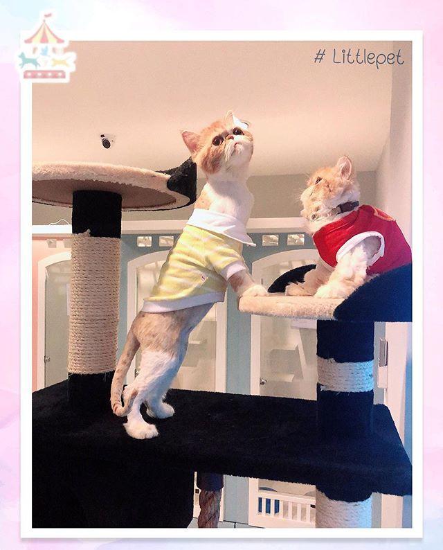 Little Pet 🐱_โรงแรมน้องแมว มี Appให้เจ้