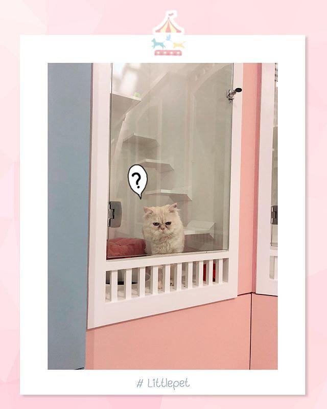 Dog/Cat hotel