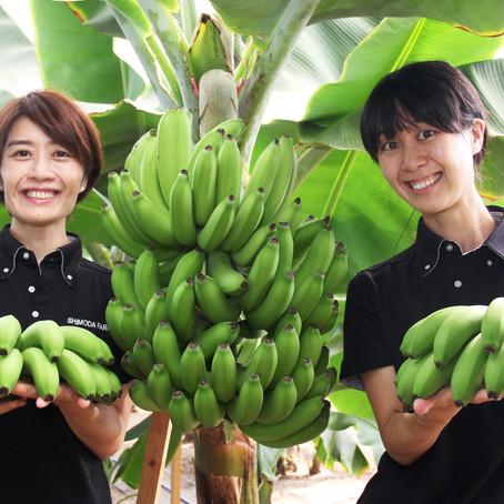 サーマルリサイクルによる国内初のバナナ栽培に成功!